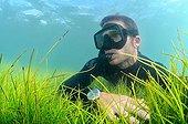 Freediver on Seagrass Syringodium Martinique