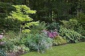 Bordure avec Erable du Japon 'Aureum' et Hortensia 'L K 49' ; Et Troène du Japon 'Rotondifolium'