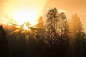 Sunrise sunrays pentrating fog Bohemian Forest Vltava val