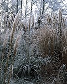 Uruguayan pampas grass and miscanthus in a garden in winter ; Landscapers : Arnaud Maurières & Eric Ossart
