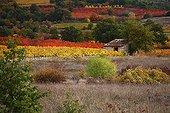 Agricultural landscape in autumn Provence France