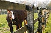Cheval de selle derrière l'enclos d'un haras en France