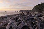 Deadwood stranded Rialto Beach Olympic NP Washington USA