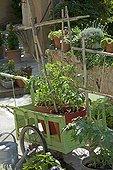 Vegetable garden in pots in spring PACA France