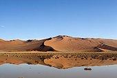 Dune and its reflection after rain Namib Desert Namibia