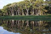Rainforest on the Brazilian Pantanal bank