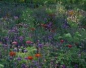 Annuals flowerbed in bloom in a garden ; Landscaper: Eric Ossart