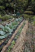 Cabbages and sowings under mulch in an organic garden