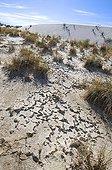 Interdunes flat White Sands NM New-MexicoUSA