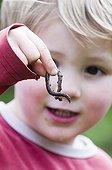 Boy holding an earthworm in a garden Norfolk UK