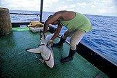 Long-line fisherman cutting fins from Blacktip Shark