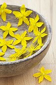 Common Saint Johnswort flowers in a wooden bowl