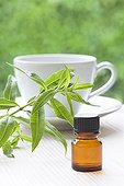 Vervain essential oil and leaves
