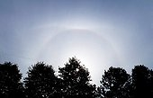 Upper tangent arc and 22 ° halo above the trees