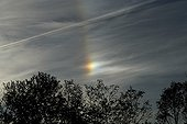 Sundog very bright above the trees France ; This sundog is so dazzling that the colors are barely perceptible. We must underexpose the photo to greatly bring out the colors.