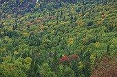 Forêt au début de l'été indien Saguenay Québec Canada