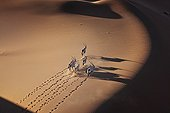 Gemsbok Oryx running on dune Namib-Naukluft NP Namibia