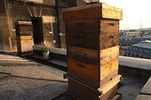 Apiary on the roof of the Paris Opera France ; France produces less and less honey and loses each year many beekeepers because of high mortality of bees from pesticides dumped into the fields. However, bees are essential to the fertilization of plants. It is a city like Paris that the bees are doing the best and produce more honey.