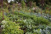 Vegetables in a flowered organic kitchen garden