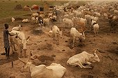 Nuer Cattle Camp in the Tioch Southern Sudan ; During a Habub, a sand storm coming from the Sahara, northern part of the country