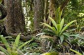 Fern undergrowth on rocky shore New Caledonia