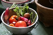 Harvest of tomatoes and radishes