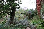 Virginia creeper in a garden in autumn