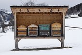 Hive away from the weather in the winter Alps France
