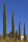Cypress Provence France