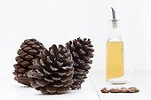 Seeds Cones and Oil of Pinyon pine on white background