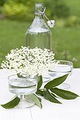 Black Elder flowers Glass and bottle of Elder lemonade ; Mix water, sugar, lemon juice and elderflower  gives a lemonade