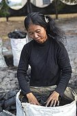 Making charcoal in Cambodia ; The Outcasts of Sihanoukville