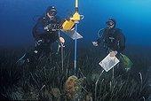 Census of Pen shell in the Mediterranean of Monaco ; Precise location with aquamètre