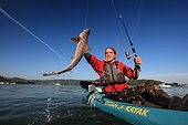 "Sport fishing for sharks in a river estuary in Brittany ; Practice of ""no kill"" : sharks are released after capture."