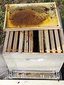 Asian hornets robbing a hive after attack ; A hive exhausted by the hornets has only a few bees. The hive will now be looted of its honey and brood. INRA Bordeaux.