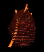 3D scan of an Asian hornet's nest to study its structure