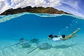 Pink Whipray and swimmer in the lagoon and Moorea