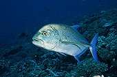 Atoll Fakarava French polynesia