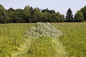 Storage of polluting green algae in a field Brittany France