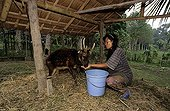 Woman feeding a Visayan Spotted Deer Philippines ; Character: Pr. Lastimosa