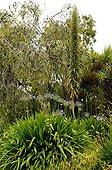Vipérine et Agapanthe dans le Jardin Exotique de Roscoff
