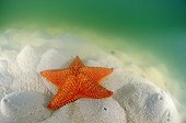 Starfish on the sand in the Los Roques archipelago NP