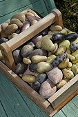 Basket of different varieties of potatoes France