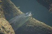 Eel out of hiding Aquarium of Bale Switzerland