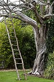 Wood ladder on a dead tree in a park of Nantes France