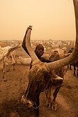 Nuer Cattle Camp in the Tioch during a sand storm Sudan ; Habub is the name of a sand storm coming from the Sahara, northern part of the country, 15 km east of Aker (akair) Sudd, Jonglei district
