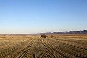 Landscape of the lagoon Gallancanta Spain