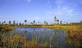 Primary peat of the Nigula swamps NR Estonia