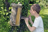 Boy visiting a nest box occupied by a titFrance
