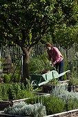 Young girl with wheelbarrow in an aromatic plants garden